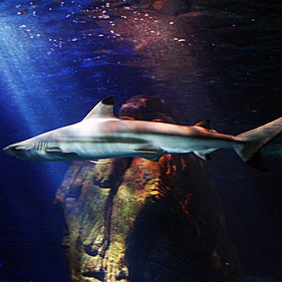 Shark Diving Tours San Francisco
