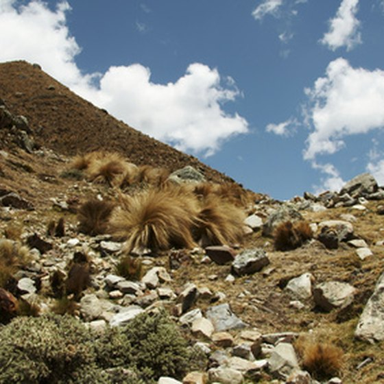 Peru's rocky landscape is home to a vibrant local culture as well as exotic sights and sounds.