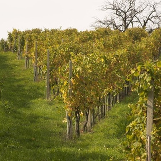 Vineyards in the Finger Lakes region