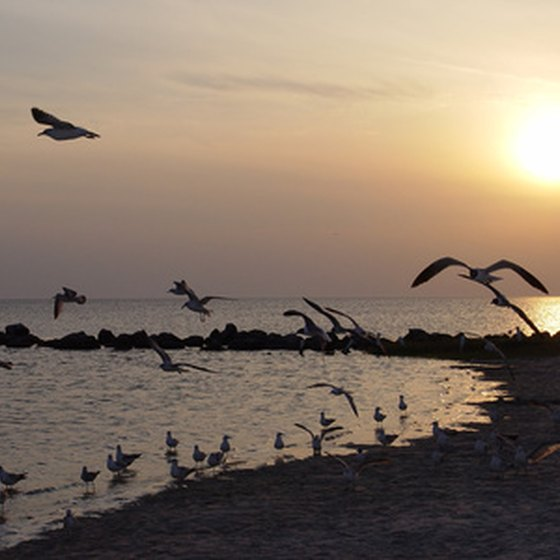 The Gulf Coast is home to many fish - and birds.