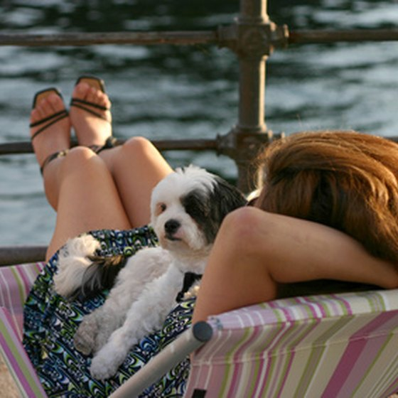 Pet Friendly Hotels for the Pet Lover
