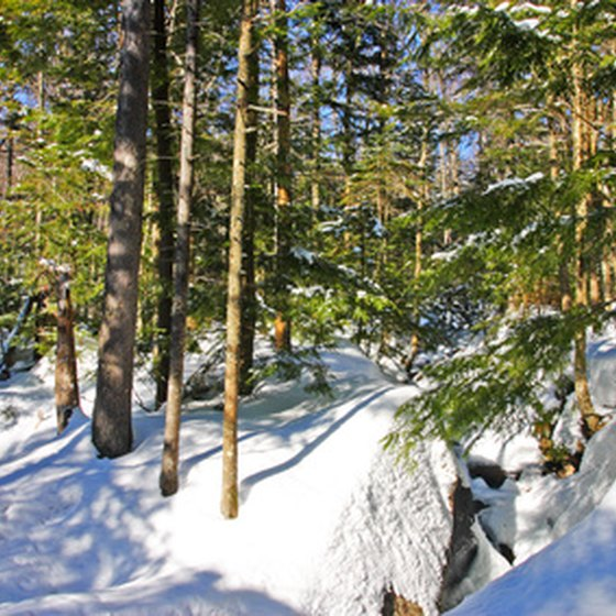 Many of New Hampshire's ski areas offer tree skiing.