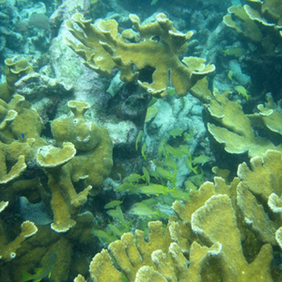 Coral reefs in Belize.