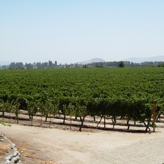 The vineyards of northern California are a perennial tourist draw.