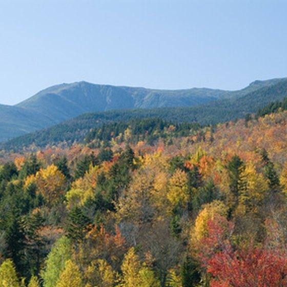 Bus tours provide a picture-perfect view of New England fall foliage.