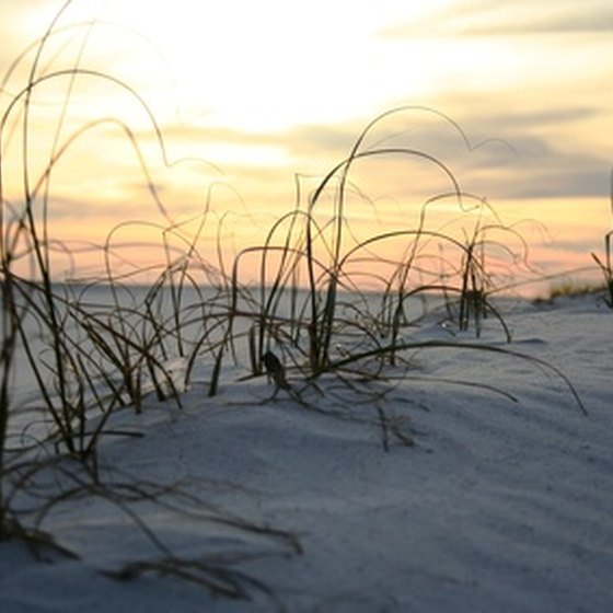 Enjoy walking through trails along Washington's sandy dunes.
