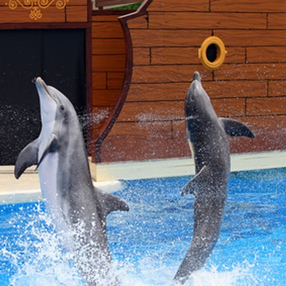 Dolphin shows are just one of the attractions of SeaWorld Orlando
