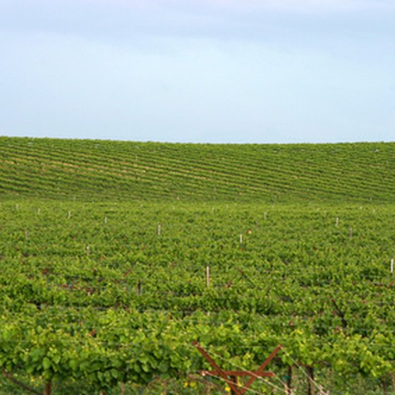 A vineyard in Napa.
