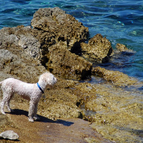 Check Hawaii's quarantine laws before traveling with your dog.