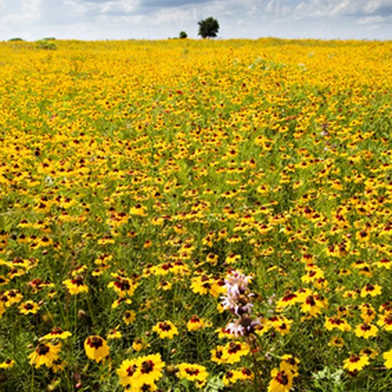 Plenty of wildflowers surround Flower Mound, Texas.