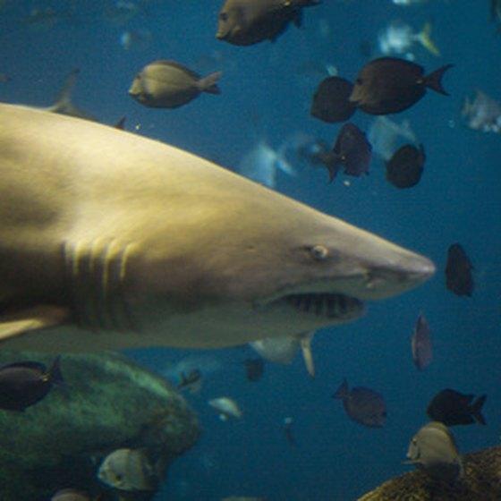 Hotels Close To Newport Aquarium Newport Ky