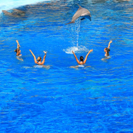 Dolphin swim experiences often include the chance to ask the dolphin to complete a trick.