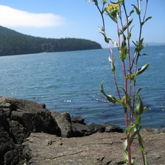 Copalis, Washington, offers visitors an outdoor adventure, with beachcombing, hiking and hunting.