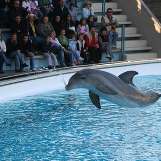 Dolphin performing at a dolphinarium