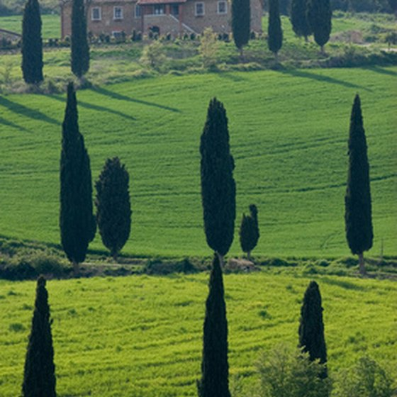 A rental villa is an ideal way to enjoy the Tuscan countryside.
