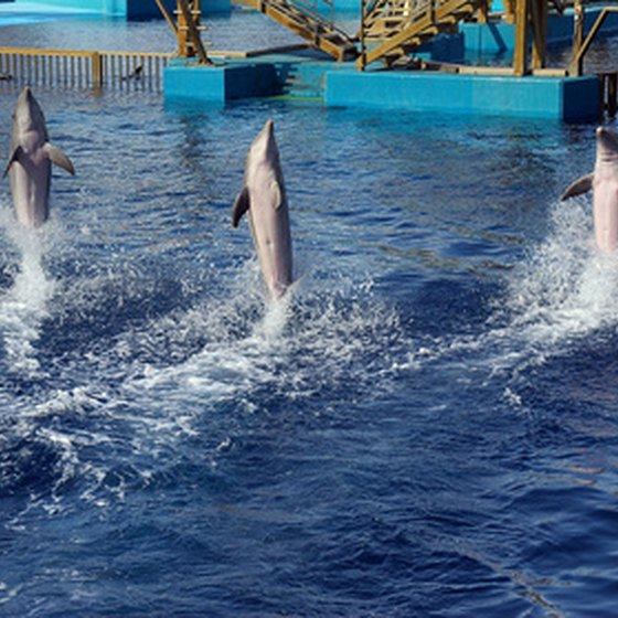 Visitors to Six Flag's Discovery Kingdom can feed, play and swim with dolphins.