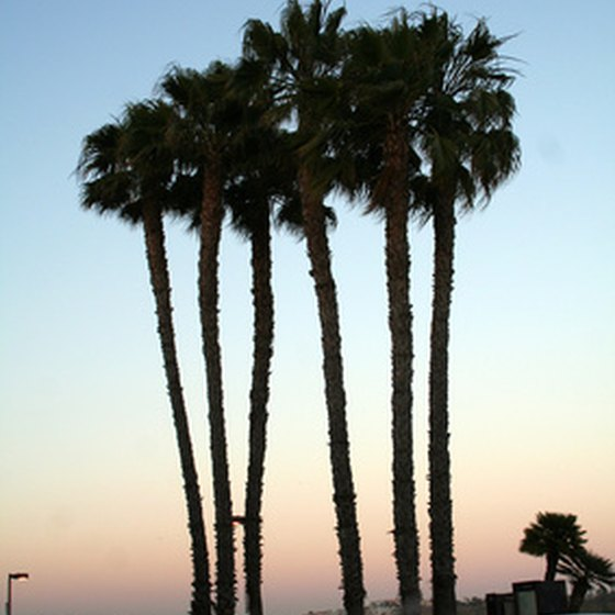 Palm trees offer shade in the desert.