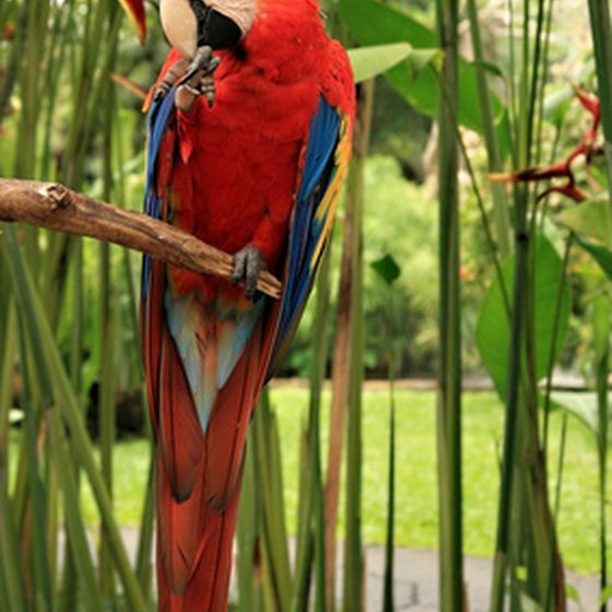 Macaws are a highlight in Peru's Amazonian tropical forests.