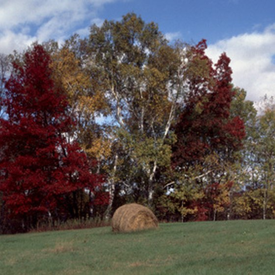 A trip to Fergus Falls, Minnesota, will bring you through rolling hills and colorful foliage.