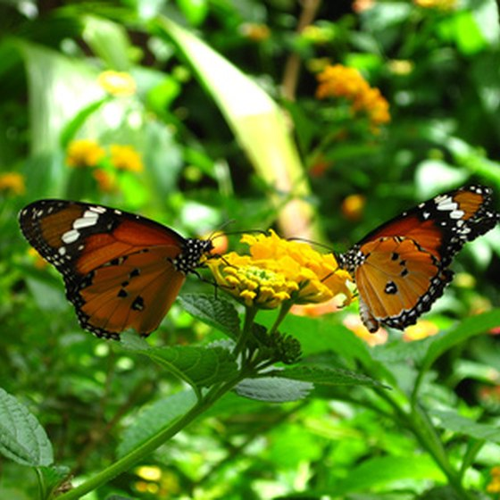 Visitors to the Hawthorne area may enjoy seeing the Butterfly Rainforest