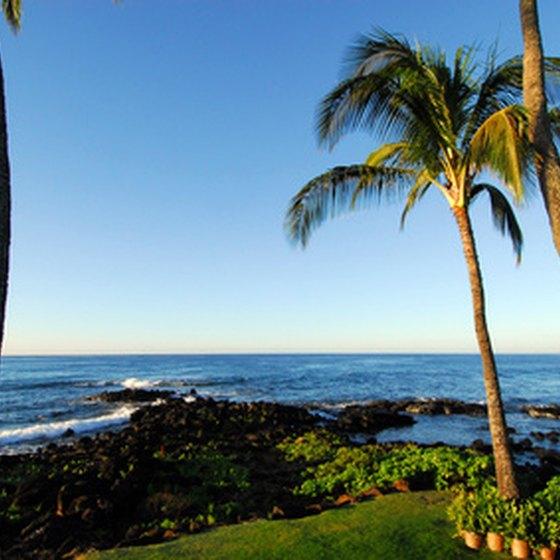 Palm trees and the Pacific Ocean are just two of the natural beauties you will see while visiting San Diego.