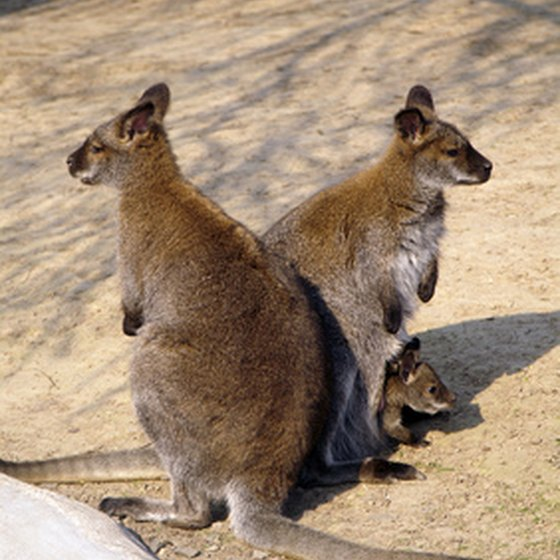 Australia's interesting wildlife is a big draw for tourists.