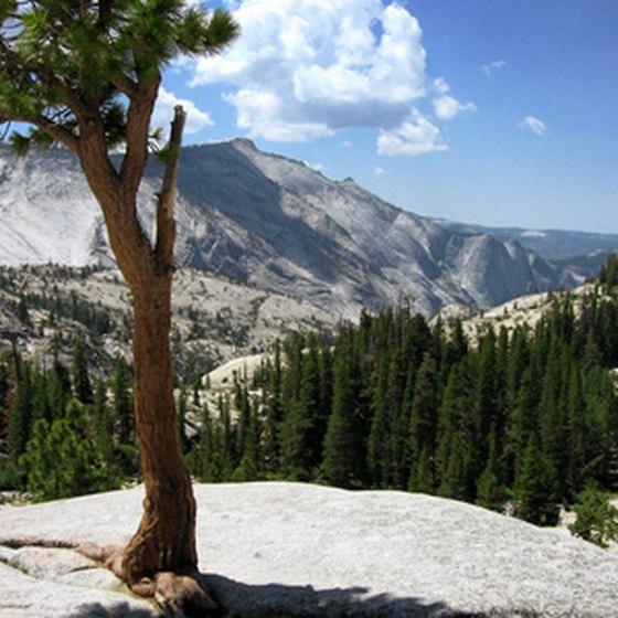 Yosemite National Park is full of beautiful scenery, an ideal location for RV campers.