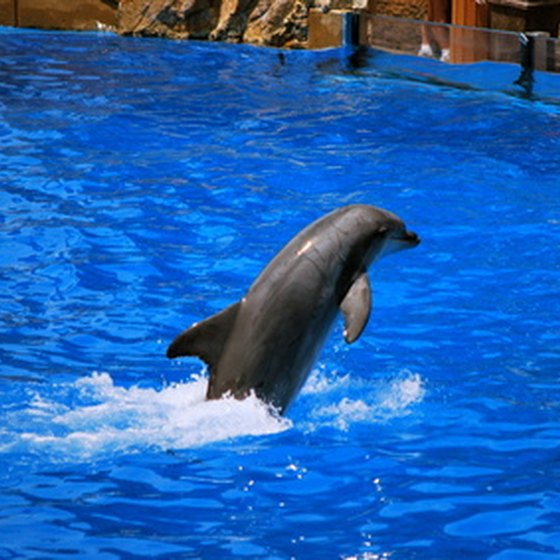 The dolphin show is among the featured attractions at Sea World.