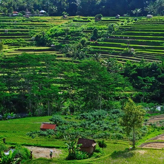 Visit the rice fields of Southeast Asia