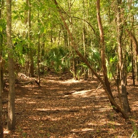 Florida is home to miles of parks and forests.