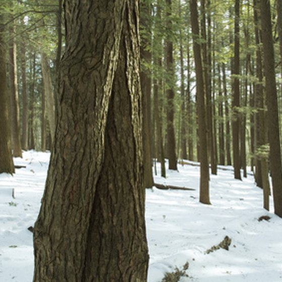 Visitors to Hocking Hills can hike through their hemlock forests.