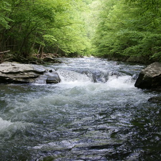 There are many attractions for families in Tennessee, including the picturesque Smokies.