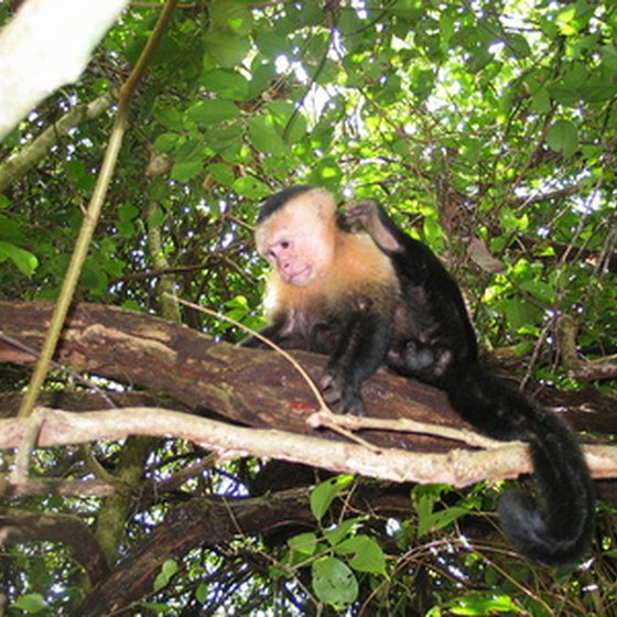 Children can see capuchin monkeys in Costa Rica's Manuel Antonio National Park.