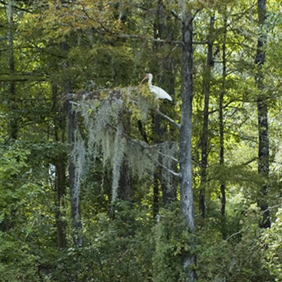 Macon County, Georgia's State Parks are home to a wide variety of plant and animal life.
