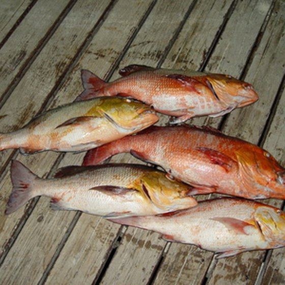 Fishing off the coast of St. Augustine can mean snapper for dinner.