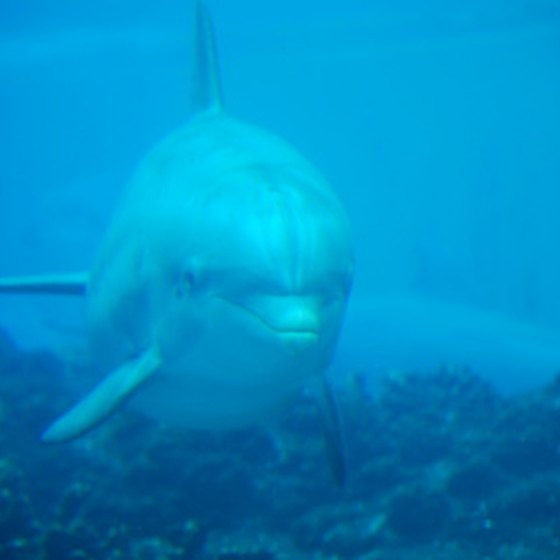 All of Roatan's dolphin swims are in the wild.