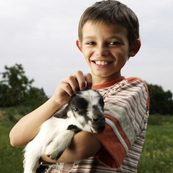 Baby goats are a petting zoo favorite.