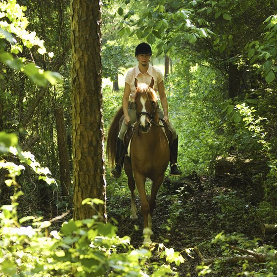 Hendersonville and the surrounding area offer a wide array of horseback-riding locations.