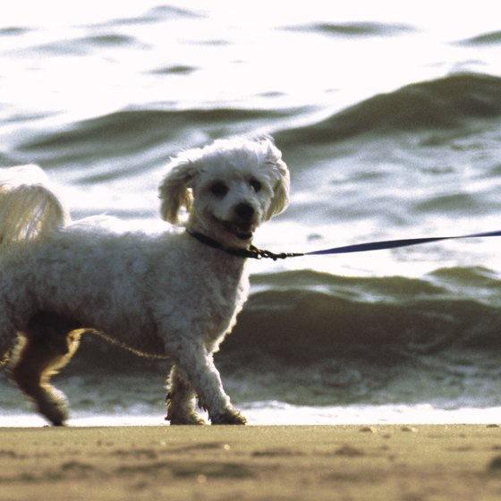 Several locations on Florida's Atlantic coast allow dogs to expore the beach.