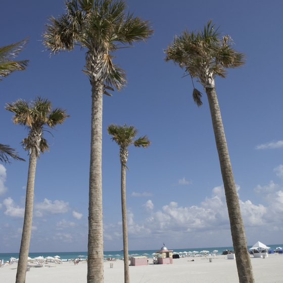 Palm trees on a Florida beach.