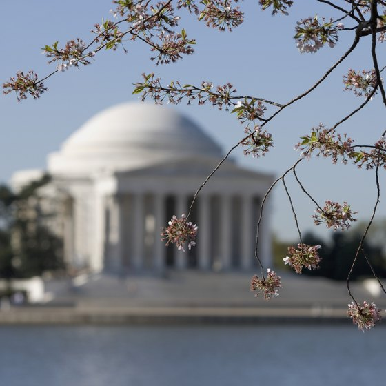 Washington's cherry trees surround the Jefferson Memorial.