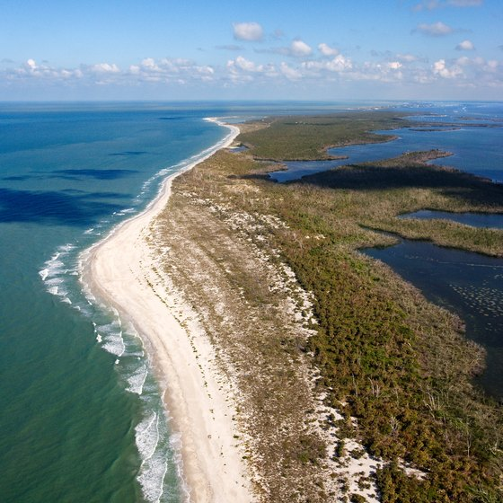 Sand and shell beaches in the Florida Keys are great wildlife-watching sites.