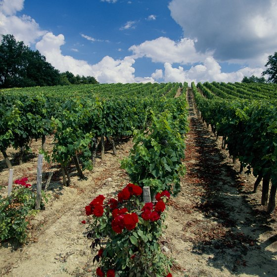Visit French wineries in the spring for the fairest traveling weather.