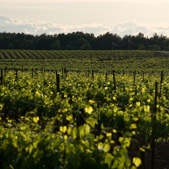 Tour the rolling vineyards along the Finger Lakes.