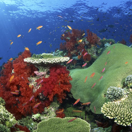 Beneath the surface of Fiji's water is a world of vivid colors and personality.