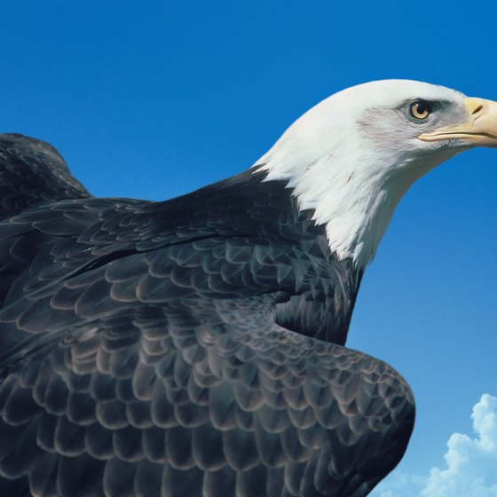 The wildlife of Licking Valley, Ohio, includes a population of bald eagles.