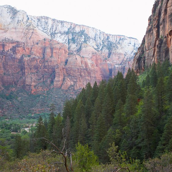 Zion National Park has several of Utah's most famous hikes.