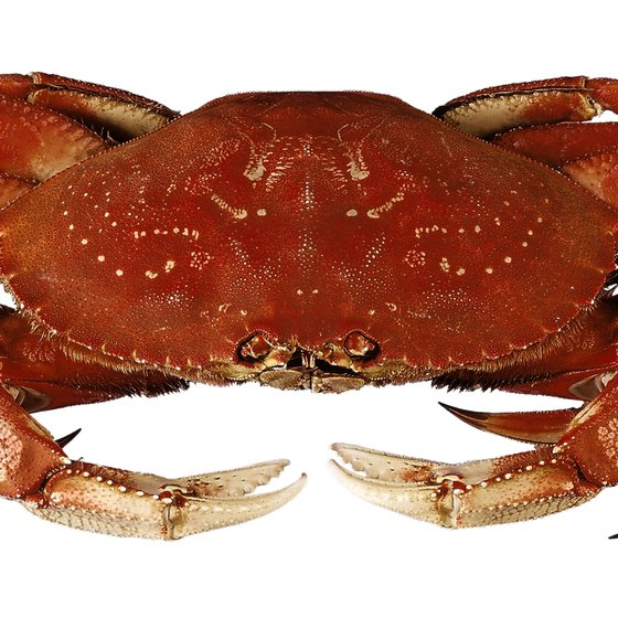 Dungeness crab is found in Pacific Ocean waters.