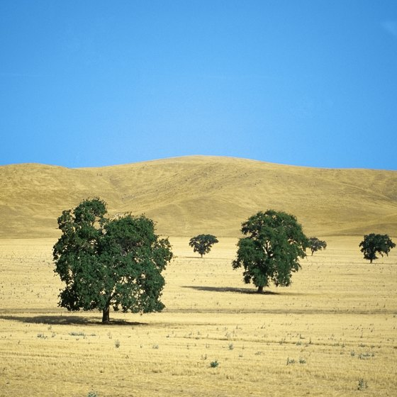 Blue skies and golden hills are the scenery outside Merced, California.