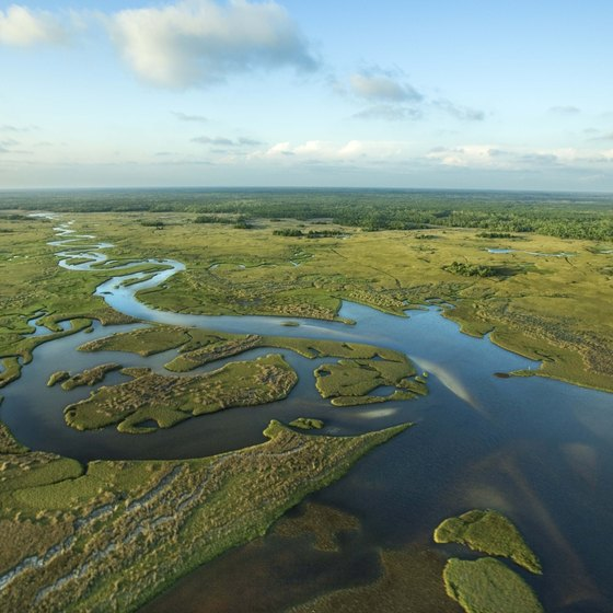 The Everglades ecosystem supports much of southern Florida's fauna.